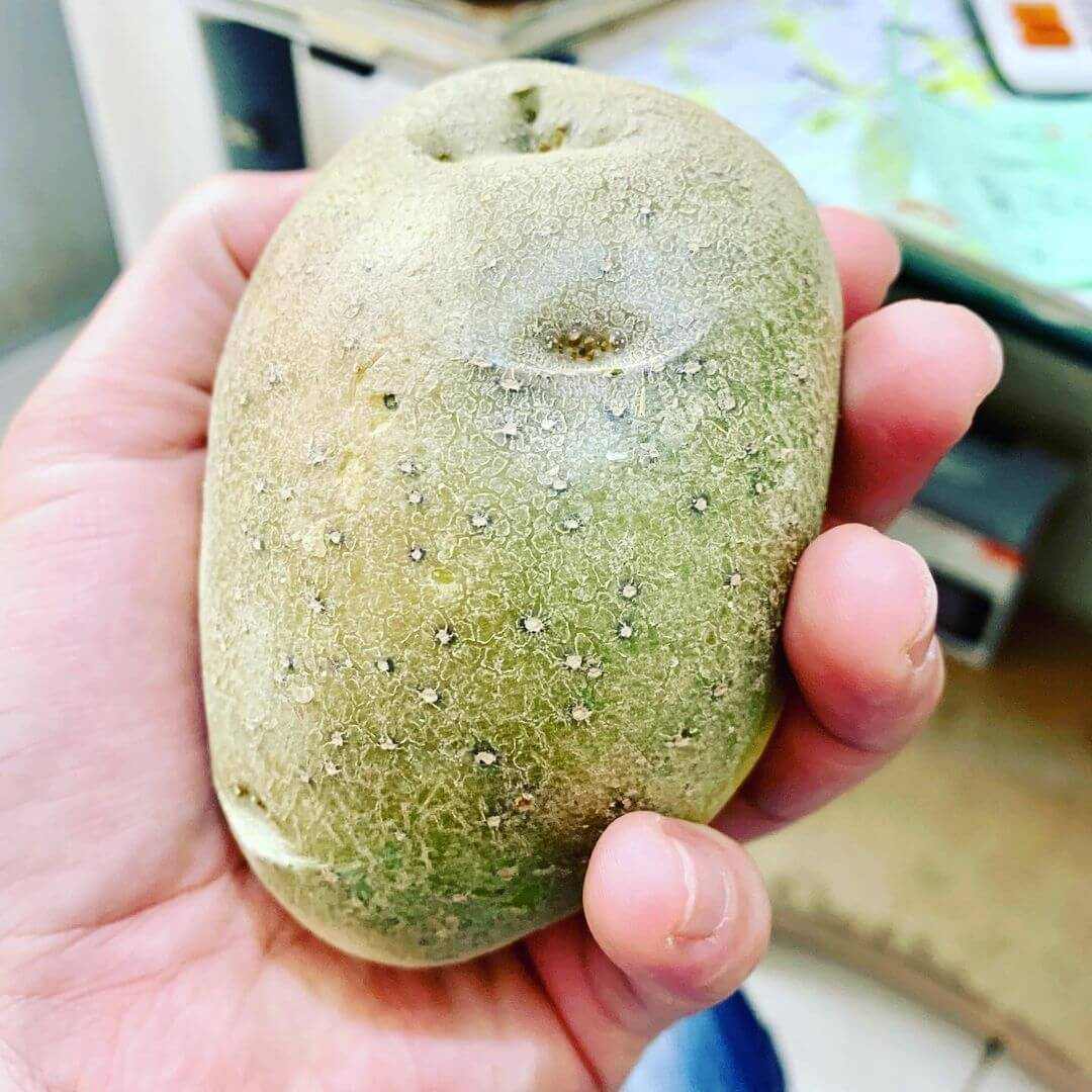 You are currently viewing Are Green Potatoes Poisonous?