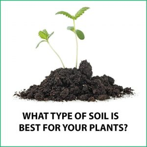 Read more about the article What Kind Of Soil Is Best For Growing Plants