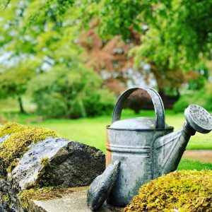 Read more about the article How Often Should Garden Be Watered?