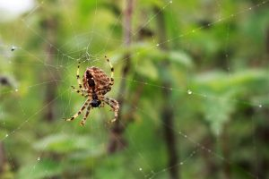 Read more about the article Plants That Keep Spiders Away
